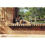 Tiger Door FRP by Overly Door Company
