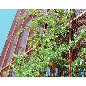 ECO-MESH Plant Screens - Grilles and Shades-McNichols Co.
