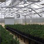 Winandy Greenhouse Company, Inc. - Greenhouse Plant Benches