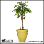 Planters Unlimited - Balboa Curved Round Fiberglass Planter