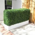 Planters Unlimited - Boxwood Hedge Privacy Screen in Modern Fiberglass Planter 36in.L x 12in.W x 72in.H, Outdoor Rated