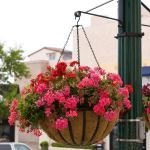 """Planters Unlimited - 22"""" English Garden Flat Steel Hanging Basket with Coco Liner and Chain"""