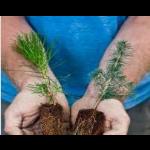 reThink Wood - Renewable Resource