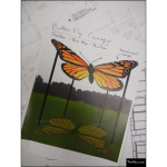 The 4 Kids - Shade/Shelter Structures - Butterfly Canopy