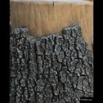 The 4 Kids - Tree House - GFRC Tree Texture
