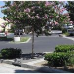 StormTree® - Tree Filter - Stormwater Management System