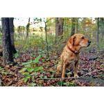 Nixalite of America Inc. - BOUNDARY™ Small Animal Fence