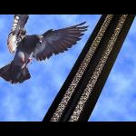 Bird-B-Gone, Inc. - Bird-B-Gone Bird Jolt FlatTrack - Electric Shock Track