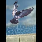 Bird-B-Gone, Inc. - Bird-B-Gone Stainless Steel Bird Spike