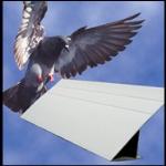 Bird-B-Gone, Inc. - Bird Slope