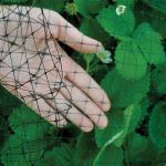Bird-B-Gone, Inc. - Garden Netting