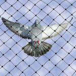 "Bird-B-Gone, Inc. - Bird Netting 3/4"" Mesh"
