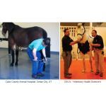 Dynamic Sports Construction, Inc - DynaSteed™ Equine Rubber Flooring