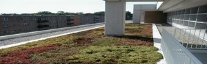 Vegetated Green Roof Systems (Parapro)